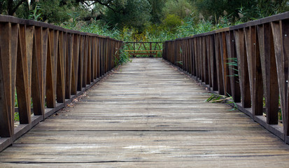 Wooden Bridge Pathway
