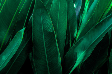 Deurstickers Fractal waves abstract green leaf texture, nature background, tropical leaf