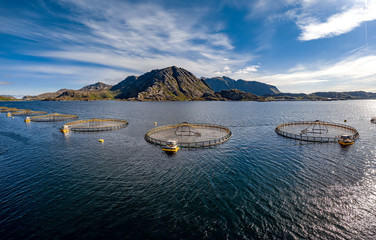 Farm salmon fishing in Norway