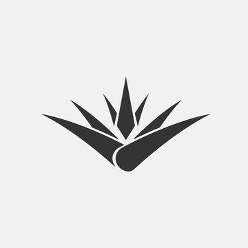 Aloe Vera vector icon herbal and medicine icon
