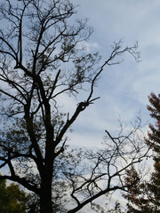 Dark shadow of a tree against a blue cloudy sky