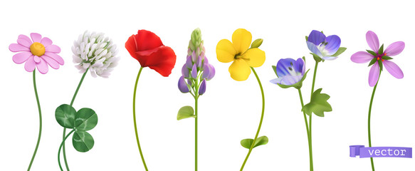 Fototapeta Wildflowers. 3d realistic vector icon set