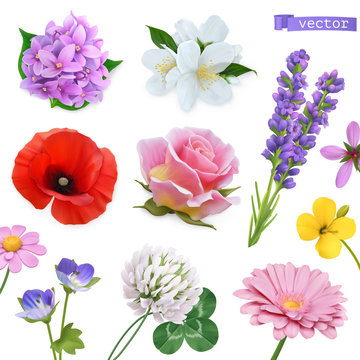 Spring flowers. Lilac, jasmine, poppy, rose, lavender, clover, chamomile. 3d realistic vector icon set
