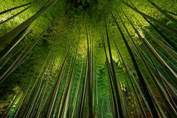 Printed kitchen splashbacks Bamboo Bamboo grove, bamboo forest in Arashiyama, Kyoto, Japan