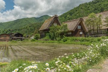 Fototapete - Cottage in historic Village of Shirakawa-go in Japan in Springtime