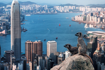 Fotomurales - Meerkat looking in Hong Kong city View