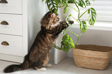 Adorable cat playing with houseplant at home