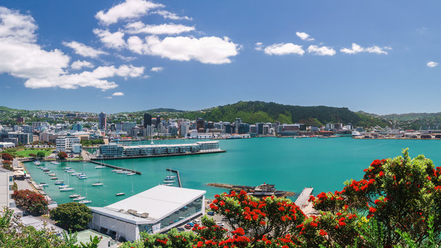 Wellington city, buildings and harbour seen from Mount Victoria with a summer flowering Pohutakawa tree in the foreground. Wellington is the capital of New Zealand.
