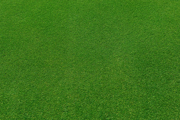 top view of real green grass background