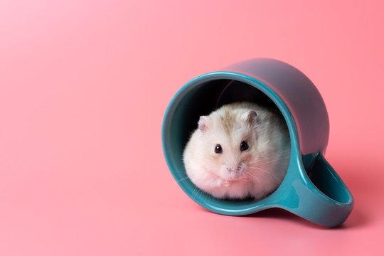 Dwarf hamster sitting in a mug close-up on pink background