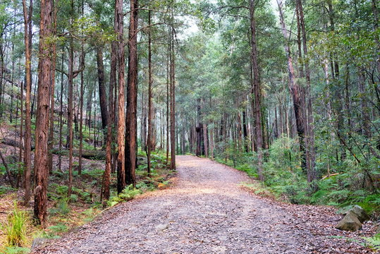 Bush walk and a walking track in wild forest in Berowra National Park, Australia