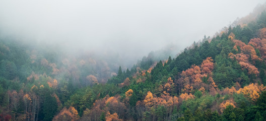 Foto op Canvas Groen blauw morning in the mountains with the fog Nature panoramic cover banner concept background.