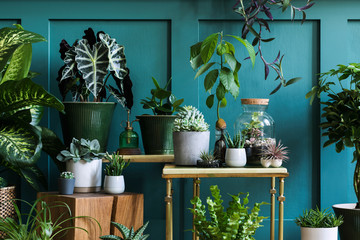 Stylish composition of home garden interior filled a lot of beautiful plants, cacti, succulents, air plant in different design pots. Green wall paneling. Template. Home gardening concept Home jungle.