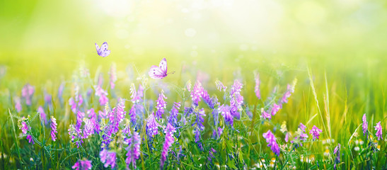 Wall Mural - Beautiful gentle spring summer natural background. Butterflies are fluttering over  meadow of wild flowers and young juicy green grass in sunlight on nature, blurred background, soft focus.