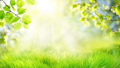 Spring summer background with frame of grass and leaves on nature. Juicy lush green grass on meadow...