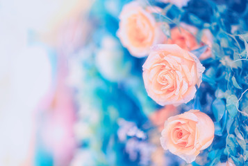 Closeup image of beautiful flowers wall background with amazing red and white roses Retro filter.