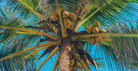 Coconut trees on the island. Selective focus. Wall mural