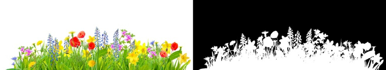 Wall Mural - spring grass and flowers isolated with clipping path for easy isolation