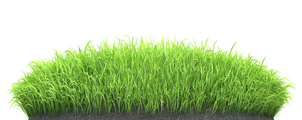 Aluminium Prints Grass green grass seedlings grow on soil turf isolated on white