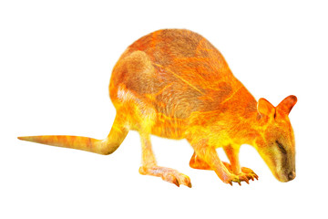 Wall Mural - Composition about Wallaby wildlife in the Australian bushfires in 2020. Wallaby with fire isolated on white background. Macropus rufogriseus species.