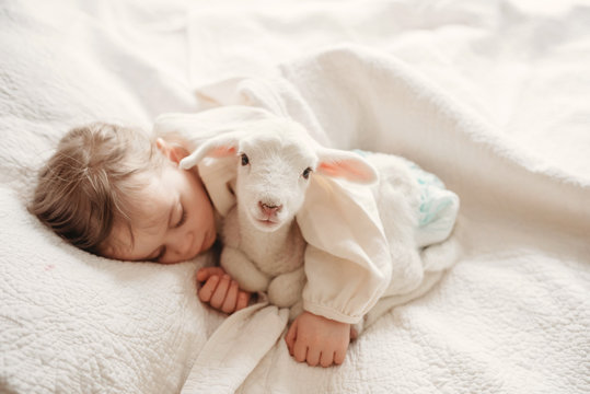 baby girl toddler laying in a bed asleep with her baby pet lamb sheep