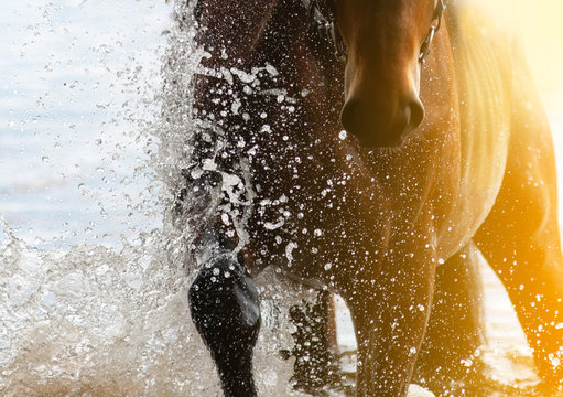 Horse in water with rider