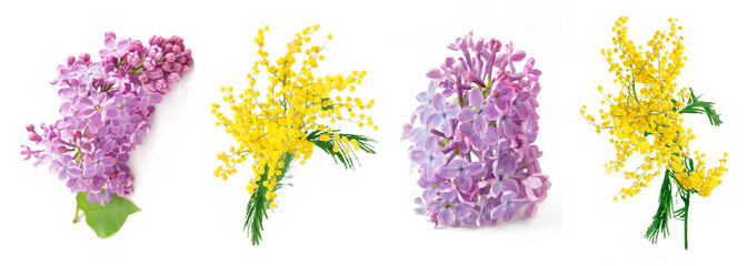 Foto auf Leinwand Flieder Mimosa and lilac flowers branch isolated on white background
