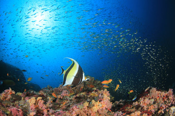 Fish and underwater coral reef