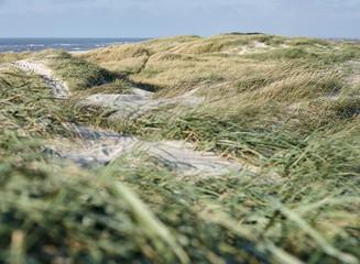 Spoed Foto op Canvas Olijf Dune landscape on the Danish coast