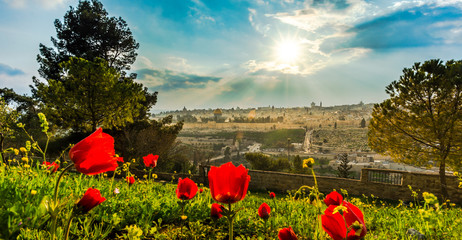 Foto op Canvas Poppy View of Jerusalem with calanit - red poppy flowers, national flower of Israel