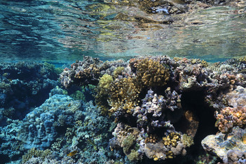 Fototapete - Coral reef in the Red Sea