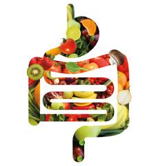 Verdauungstrakt aus Obst und Gemüse