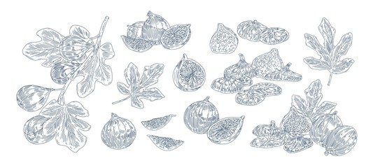 Fig tree fruits black ink illustrations set. Hand drawn ripe whole and sliced berries pack. Fig plant twigs and leaves monochrome drawings. Sweet exotic fruits isolated on white background.