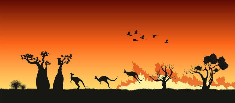 Black silhouettes of Australian animals in bushfire. Pray for Australia. Scene of forestfire with kangaroo, koala and parrots