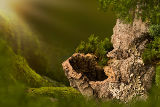 Tree trunk with hole on moss