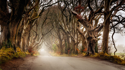 Fotorolgordijn Chocoladebruin Early morning in autumn with mist or fog at The Dark Hedges County Antrim, Northern Ireland. Filming location of popular TV show, Kingsroad, Game of Thrones