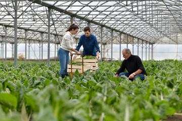 Farmer with apprentice working in greenhouse Fototapete