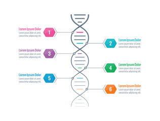 dna symbol, dna chain infographic template. information template with six options. business infographic concept