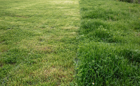 Cut strip of green grass. Mowing the lawn, close-up