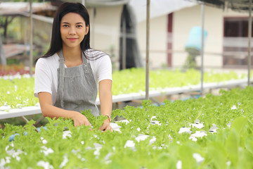 The woman who owner the hydroponic vegetable garden She is monitoring the growth of vegetables...