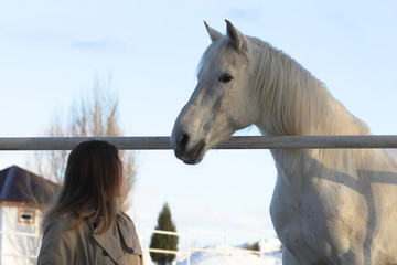 Young woman and white horses in the corral outdoor in winter