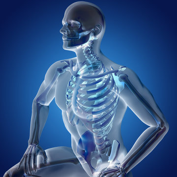 3D render of a male medical figure with skeletal system highlighted.