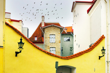 Wall Mural - Streets, birds, gulls, of old Tallinn