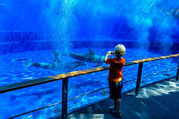 A boy taking pictures of dolphins swimming underwater