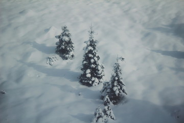 Three fir trees burried in the snow