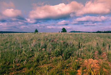 Photo sur Aluminium Lavende South African field landscape photograph