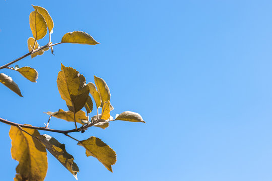 Green leaves sign of autumn season and sun on blue sky