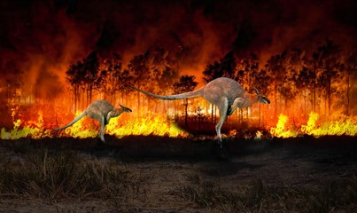 Foto op Canvas Kangoeroe Australia fire, kangaroo running away from the bushfire