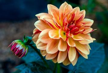 reddish orange flower up close