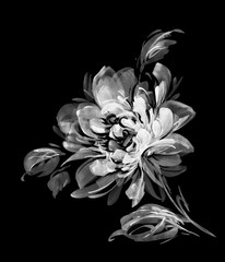 A bunch of peony flowers by ink painted on black background